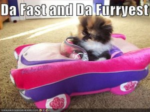 funny-pictures-kitten-is-fastest-and-furriest.jpg