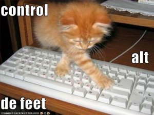 funny-pictures-cat-uses-the-keyboard-for-evil.jpg